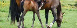 horse insurance new york